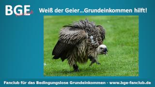BGE Geier - Bild größer - Download oder Link kopieren