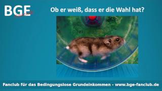 Hamster Wahl - Bild größer - Download oder Link kopieren