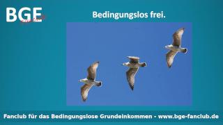Vögel Frei - Bild größer - Download oder Link kopieren